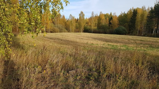 aitainmäenranta pelto